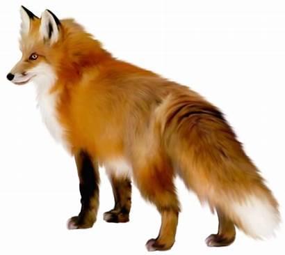 Fox Transparent Clipart Animals Yopriceville