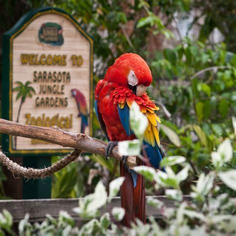 Jungle Gardens Sarasota by Sarasota Jungle Gardens Directions Info Map Hours
