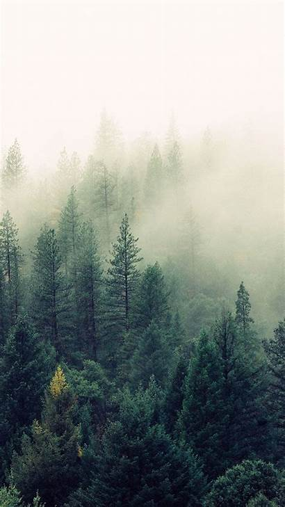 Forest Iphone