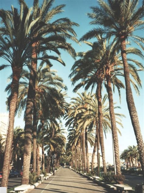 palm trees iphone wallpapers Tumblr
