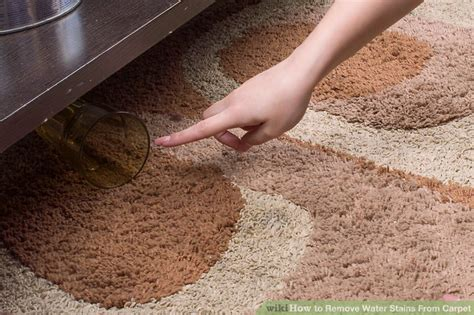 3 Ways To Remove Water Stains From Carpet Cost Of Carpeting A Bedroom Hamilton Ontario Carpet Cleaning Uk Prices Celebrity Kansas City Recycling Centers Nj How To Get Dried Gum Out Beetle Pictures Larvae Put Down