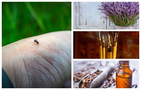 How To Keep Flies Away From Backyard by 21 Best Ways To Keep Mosquitoes Away From You Your Home