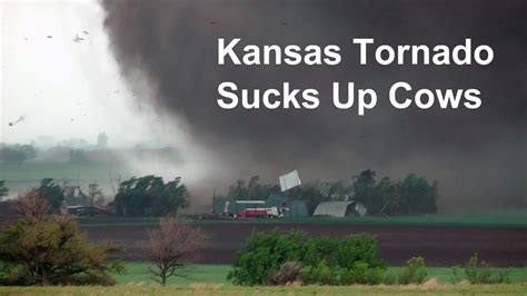kansas tornado sucks  cows  blows farm  youtube