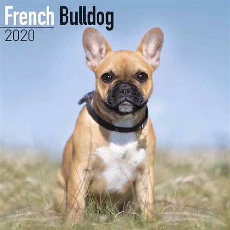 french bulldog calendar calendar club uk
