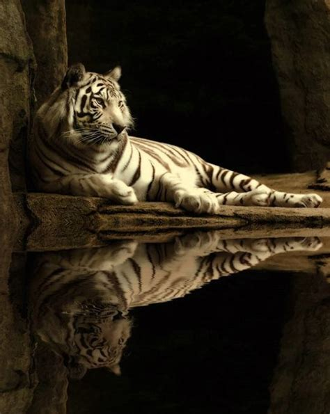 Most Amazing Animals Photos Golberz