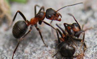 Ameisen Im Garten Selbstde