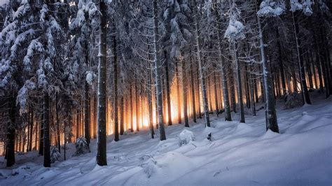 nature forest trees snow winter wallpapers hd