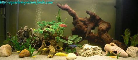 poisson africain aquarium eau douce 1 les cichlid 233 s des grands lacs africain aquarium site de poisson tropicaux