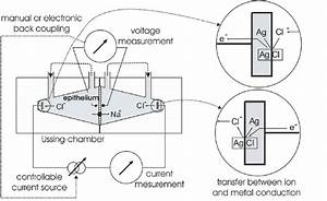 Principle of a measuring setup in the Ussing chamber The ...