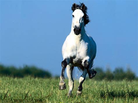 horses running nice horse pony