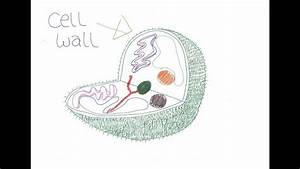 Cells Made Simple: Cell Wall and Cell Membrane - YouTube
