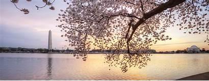Cherry Panoramic Blossom Sunrise Basin Tidal Tree
