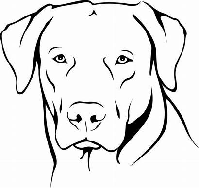 Labrador Dog Drawing Portrait Retriever Dogs Drawings