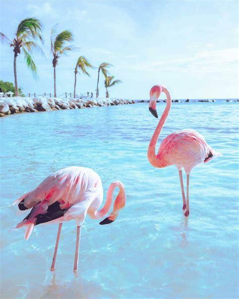 flamingo party glitbit tropical vibes flamingos