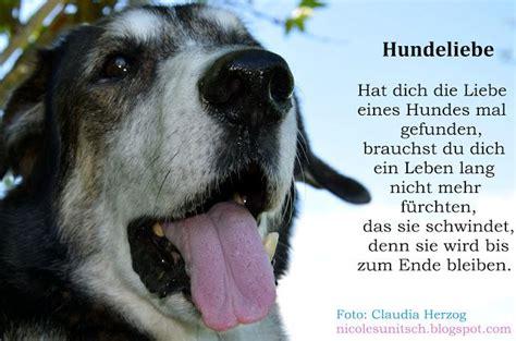 Glueckliche Haustiere Was Hunde Brauchen by Hundeliebe Zitat Sunitsch Gedichte Zitate