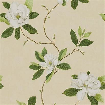 Sanderson Cream Bay Sweet Parchment Flowers Wallpapers