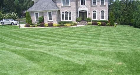 Drought Tolerant Bermuda Grass From Park Avenue Turf
