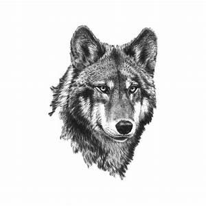 Loup Tatouage Signification : tatouage loup plume ie36 montrealeast ~ Dallasstarsshop.com Idées de Décoration