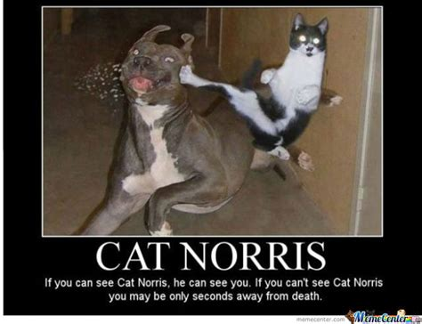 Amazing Meme Some Of The Most Amazing Cat Memes Out There Cat On