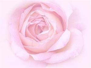 Pink Rose Backgrounds - Wallpaper Cave