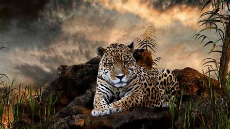 Leopard Animal Wallpaper - animals leopard wallpapers hd images photos free