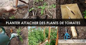 Planter Des Graines De Tomates : planter et attacher des plants de tomates instructions ~ Dailycaller-alerts.com Idées de Décoration