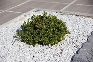 Alternative Zum Buchsbaum : ilex statt buchsbaum baumschule hemmelmeyer ~ Frokenaadalensverden.com Haus und Dekorationen