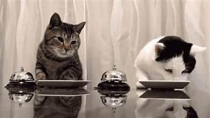 Cats Cat Ring Bells Bell Dinner Team