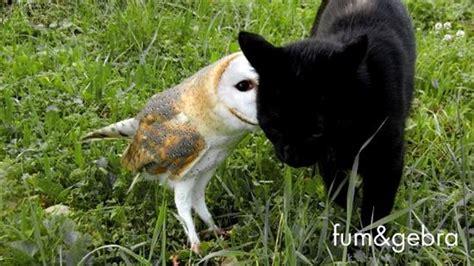 weirdest animal friendships
