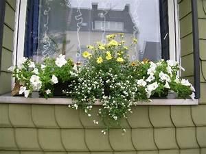 Herbstliche Blumenkästen Bilder : fotos von euren fensterbank blumenk sten mein sch ner ~ Lizthompson.info Haus und Dekorationen
