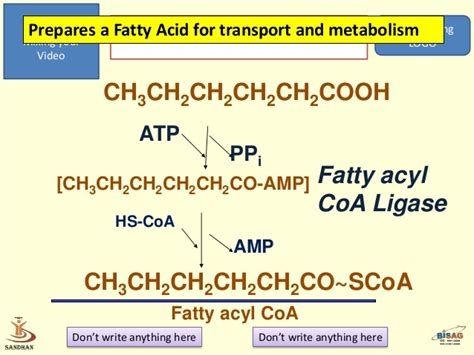 Metabolism Protein And Fat