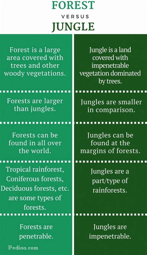 Difference Between Forest and Jungle Pediaa Com
