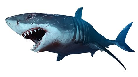 Shark Image Scary Sharks Png Image Picpng