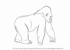 Learn How To Draw A Gorilla Wild Animals Step By Step