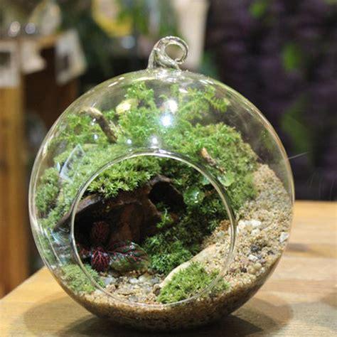 pc globe ball glass hanging plant terrarium flower vase