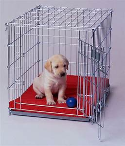 5 must know tips for crate training your puppy With why crate a dog
