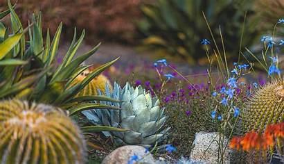 Desktop Desert Garden Happy Naina Wallpapers Plant