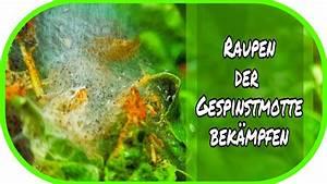 Schädlinge Im Garten : raupen der gespinstmotte im garten bek mpfen ~ A.2002-acura-tl-radio.info Haus und Dekorationen