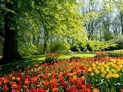 Garden Flowers Colors
