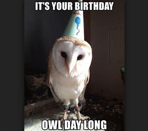 Owl Birthday Meme - owl birthday meme 28 images owl birthday meme 100 images owl birthday memes owl birthday
