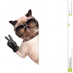 peace cats cat with peace fingers in black leather gloves stock photo