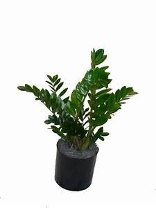 ZZ - Zulu - The Plant Lady