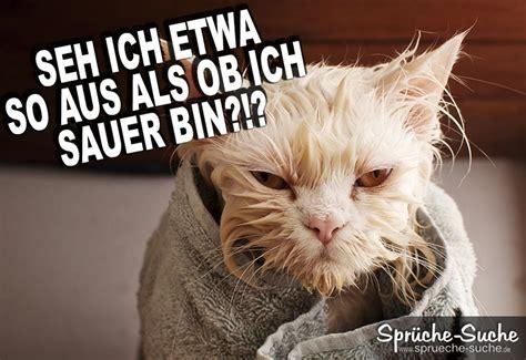 lustige katzen bilder spr he spruch website