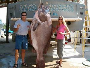 Big Fishes of the World: GROUPER GOLIATH (Epinephelus itajara)