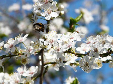 Pflanzen Im März by 91 Besten Pflanzen Bilder Auf Pflanzen