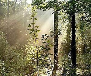 Baumarkt Near Me : fototapete bild tapete morning forest 300x250cm wandbild wandtatoo wald bord re wallpaper wall ~ A.2002-acura-tl-radio.info Haus und Dekorationen