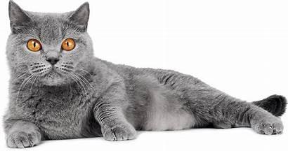 Cat Grey Farm Cattery