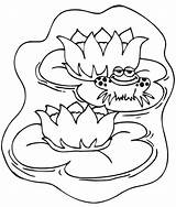 Coloring Pond Frog Animals Lily Template Pad Animal Popular Unique Coloringhome sketch template
