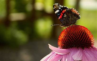 Butterfly Flower Wallpapers Butterflies Walls Android Hdnicewallpapers