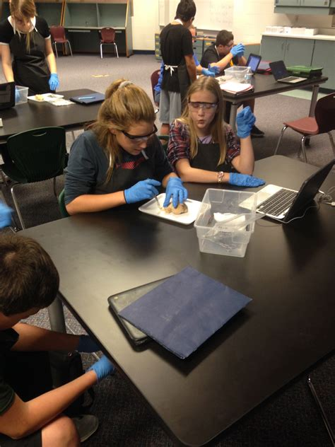 dms students dissecting sheeps brain discovery middle